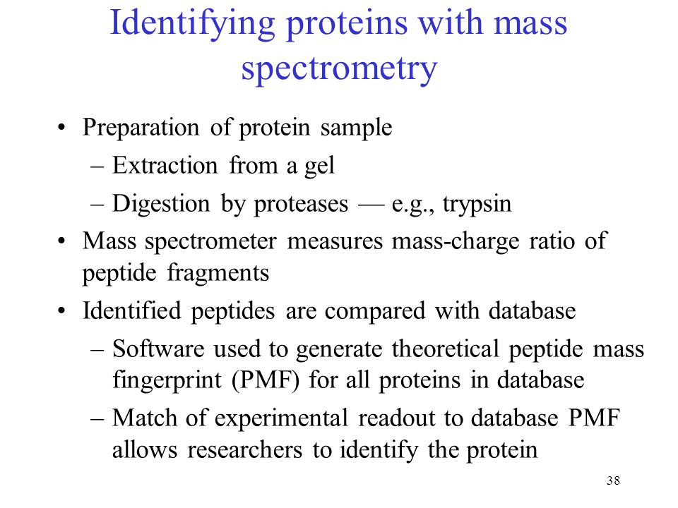 38 Identifying proteins with mass spectrometry Preparation of protein sample –Extraction from a gel –Digestion by proteases — e.g., trypsin Mass spectrometer measures mass-charge ratio of peptide fragments Identified peptides are compared with database –Software used to generate theoretical peptide mass fingerprint (PMF) for all proteins in database –Match of experimental readout to database PMF allows researchers to identify the protein