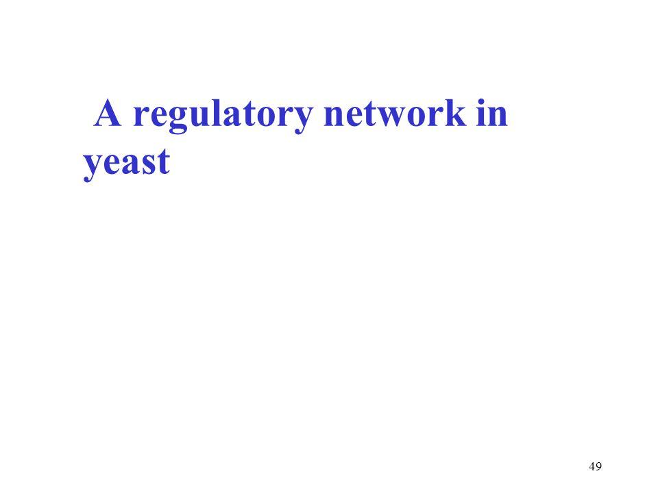 49 A regulatory network in yeast