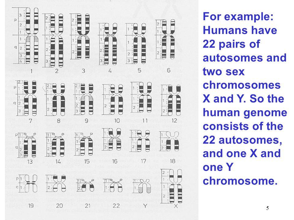 6 What is Genomics.(1) Genomics is the study of genomes.