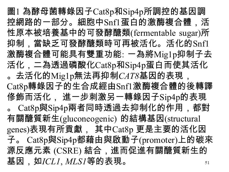 51 Exon 3 圖 1 為酵母菌轉錄因子 Cat8p 和 Sip4p 所調控的基因調 控網路的一部分。細胞中 Snf1 蛋白的激酶複合體,活 性原本被培養基中的可發酵醣類 (fermentable sugar) 所 抑制,當缺乏可發酵醣類時可再被活化。活化的 Snf1 激酶複合體可能具有雙重功能 : 一為將 Mig1p 抑制子去 活化,二為透過磷酸化 Cat8p 和 Sip4p 蛋白而使其活化 。去活化的 Mig1p 無法再抑制 CAT8 基因的表現, Cat8p 轉錄因子的生合成經由 Snf1 激酶複合體的後轉譯 俢飾而活化, 進一步刺激另一轉錄因子 Sip4p 的表現 。 Cat8p 與 Sip4p 兩者同時透過去抑制化的作用,都對 有關醣質新生 (gluconeogenic) 的結構基因 (structural genes) 表現有所貢獻, 其中 Cat8p 更是主要的活化因 子。 Cat8p 與 Sip4p 都藉由與啟動子 (promoter) 上的碳來 源反應元素 (CSRE) 結合,進而促進有關醣質新生的 基因,如 ICL1, MLS1 等的表現。