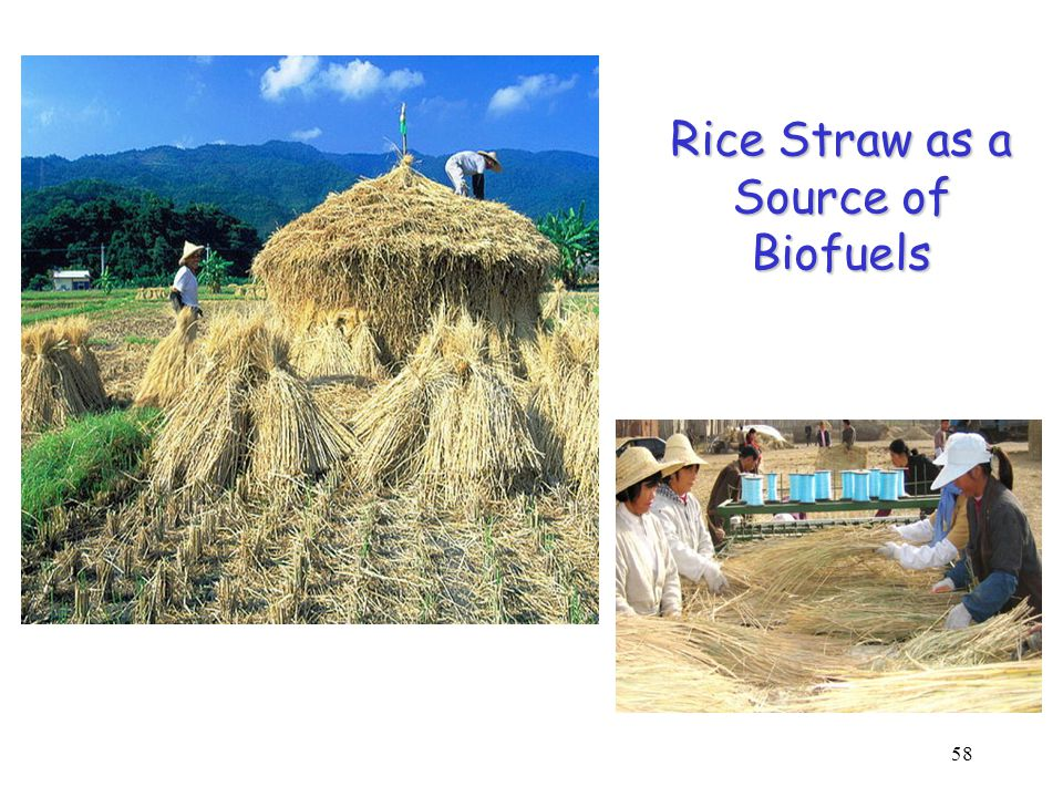 58 (http:// www.jsxnw.gov.cn ) Rice Straw as a Source of Biofuels