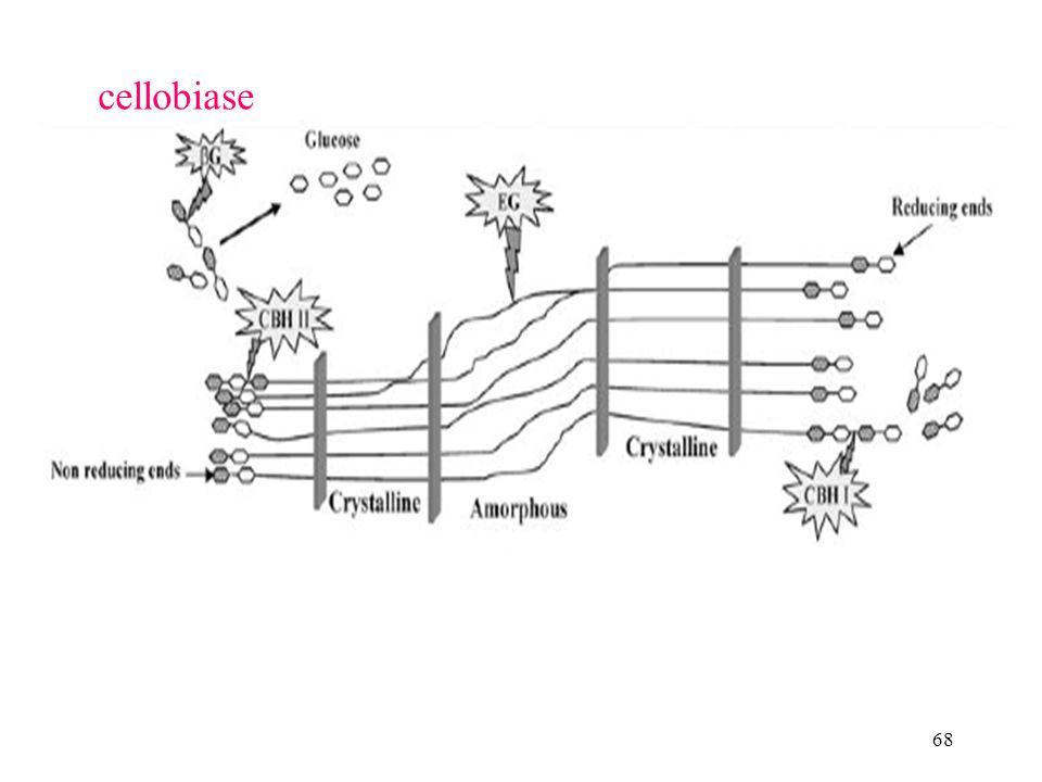 68 cellobiase