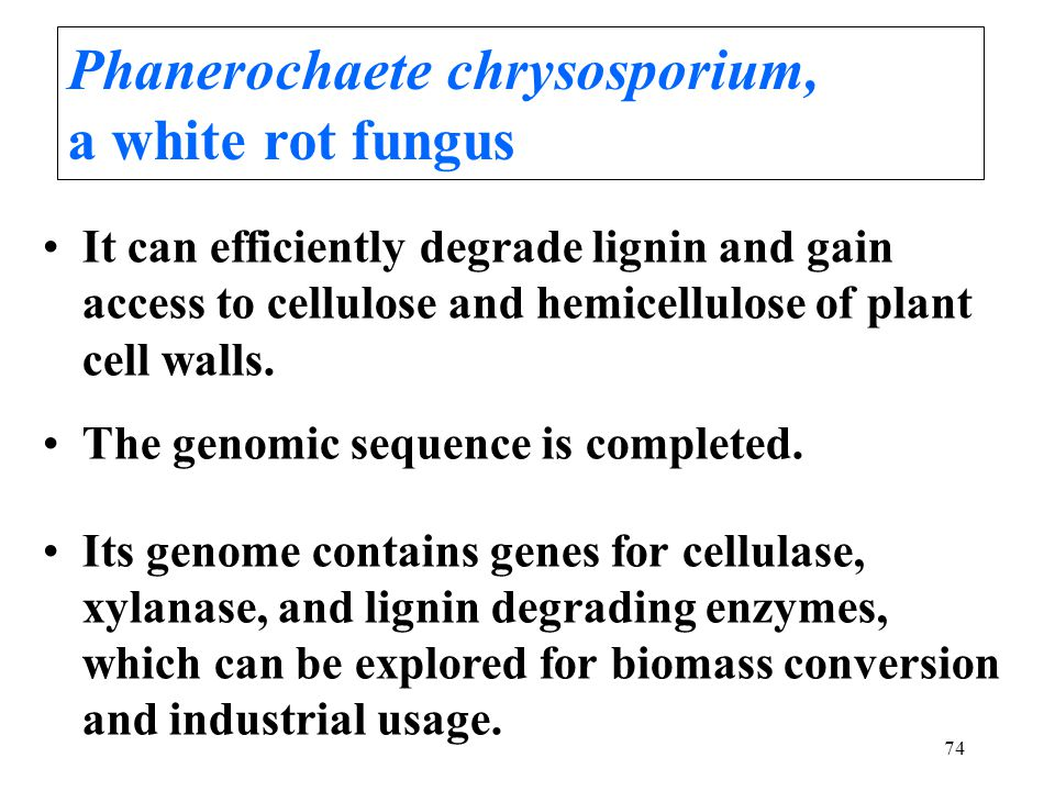 74 It can efficiently degrade lignin and gain access to cellulose and hemicellulose of plant cell walls.