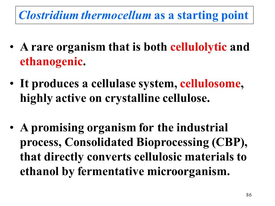 86 A rare organism that is both cellulolytic and ethanogenic. It produces a cellulase system, cellulosome, highly active on crystalline cellulose. A p