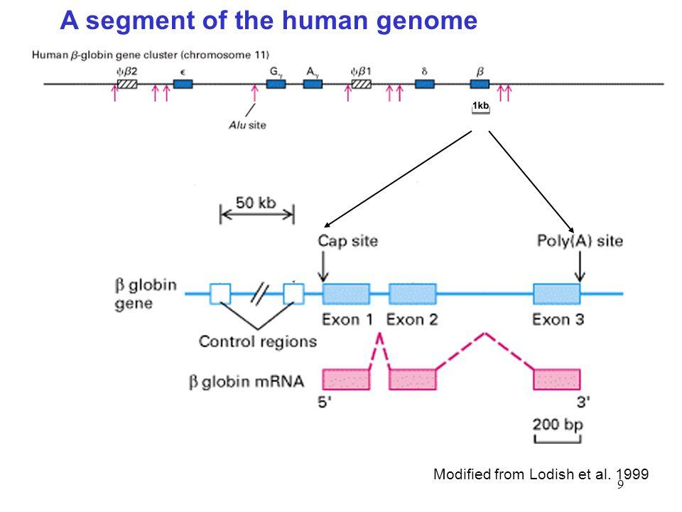 9 A segment of the human genome