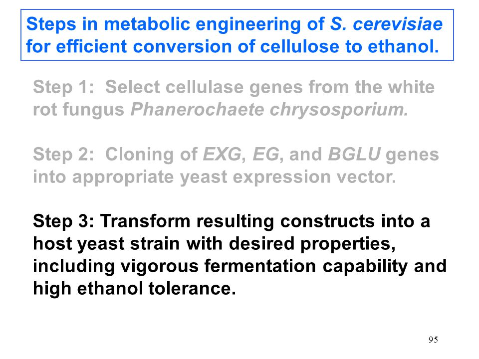 95 Steps in metabolic engineering of S. cerevisiae for efficient conversion of cellulose to ethanol. Step 1: Select cellulase genes from the white rot