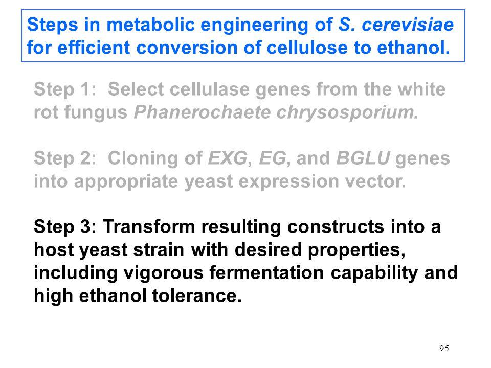 95 Steps in metabolic engineering of S.