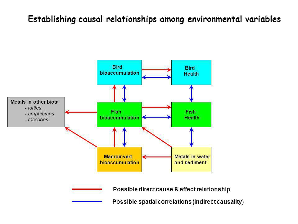 Establishing causal relationships among environmental variables Possible direct cause & effect relationship Possible spatial correlations (indirect causality) Bird bioaccumulation Bird Health Fish bioaccumulation Fish Health Macroinvert bioaccumulation Metals in other biota - turtles - amphibians - raccoons Metals in water and sediment