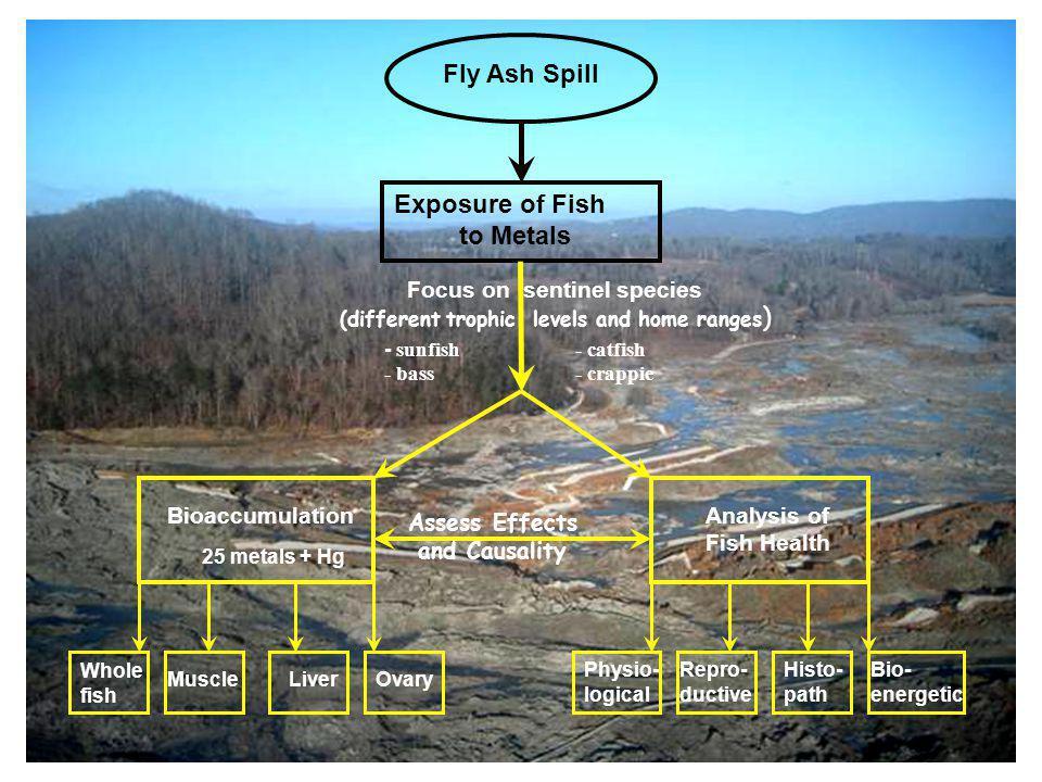 CRM 1.5 CRM 7 ERM 8 (Ref) CRM 8 ERM 0.9 ERM 3 Little Emory (Ref) CRM 25.0 (ref) Ash spill