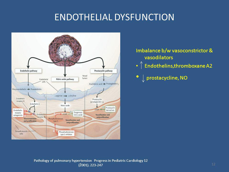 ENDOTHELIAL DYSFUNCTION Imbalance b/w vasoconstrictor & vasodilators Endothelins,thromboxane A2 prostacycline, NO Pathology of pulmonary hypertension Progress in Pediatric Cardiology 12 (Ž001).