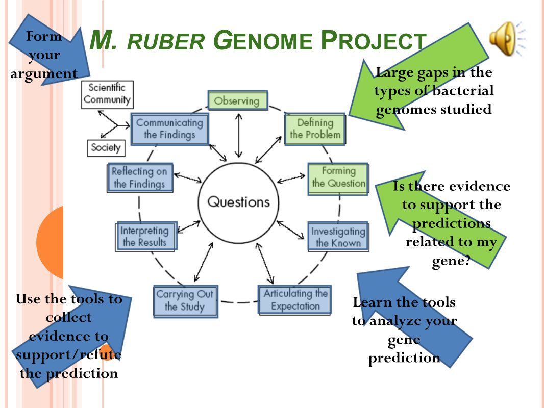 MEIOTHERMUS RUBER GENOME ANNOTATION PROJECT Genome annotation - the process of attaching biological information to DNA sequences o It consists of two main steps:  identifying elements on the genome, a process called Gene Calling, and  attaching biological information to these elements o Technology is called Bioinformatics – using computer programs to analyze sequence information and make predictions Functional genomics – benchtop research o Gene cloning to isolate the gene of interest from the genome o Mutational studies to confirm biological function predictions