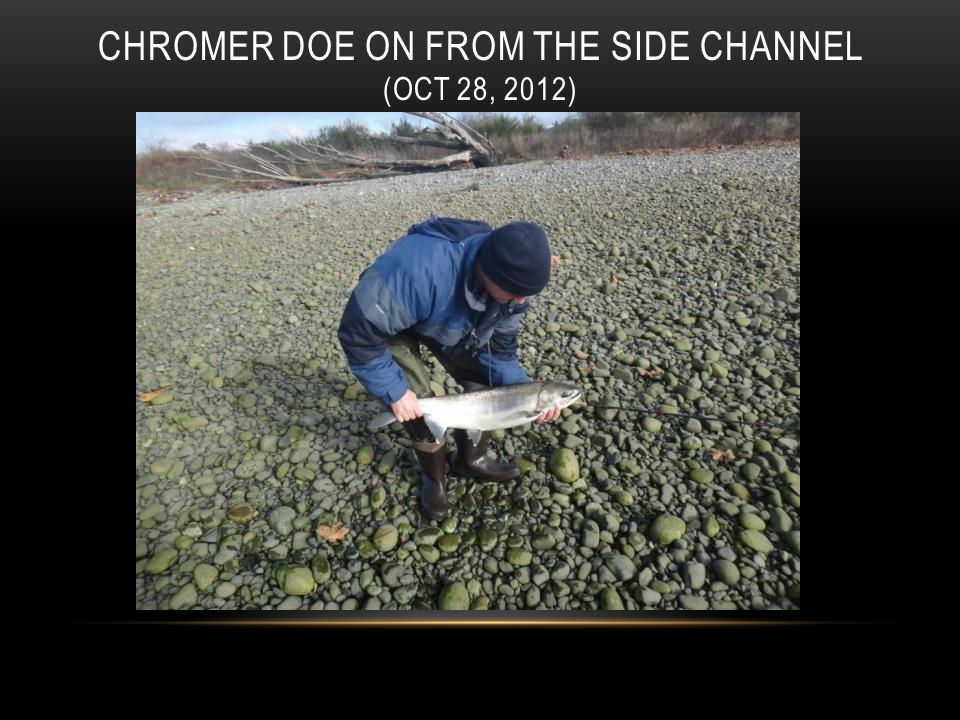 CHROMER DOE ON FROM THE SIDE CHANNEL (OCT 28, 2012)