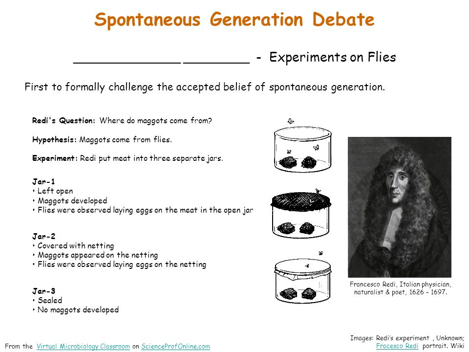 Spontaneous Generation Debate _____________ ________ - Experiments on Flies Redi's Question: Where do maggots come from? Hypothesis: Maggots come from