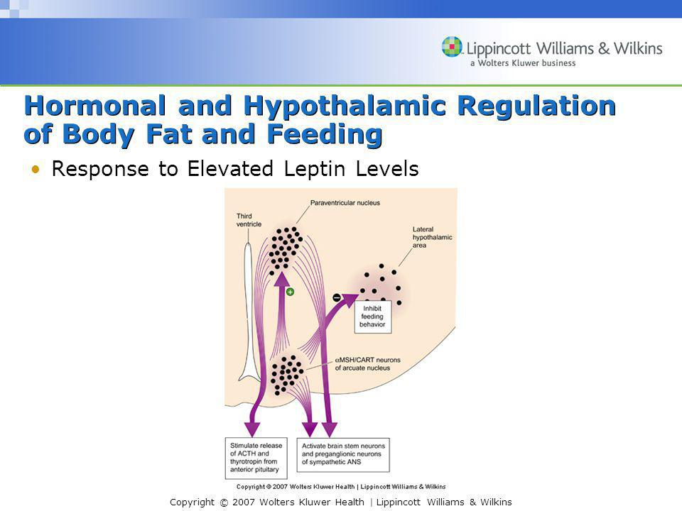 Copyright © 2007 Wolters Kluwer Health | Lippincott Williams & Wilkins Hormonal and Hypothalamic Regulation of Body Fat and Feeding Response to Elevated Leptin Levels