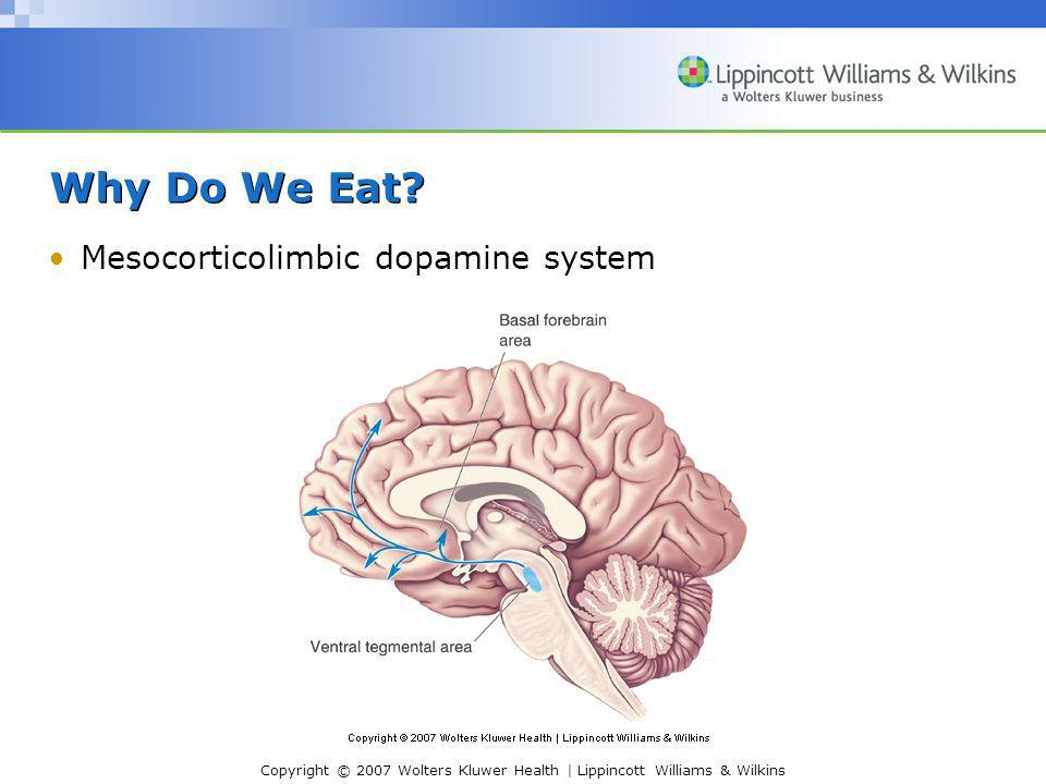 Copyright © 2007 Wolters Kluwer Health | Lippincott Williams & Wilkins Why Do We Eat? Mesocorticolimbic dopamine system