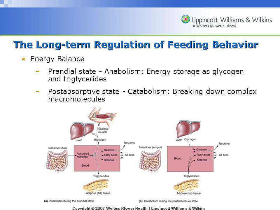 Copyright © 2007 Wolters Kluwer Health | Lippincott Williams & Wilkins The Long-term Regulation of Feeding Behavior Energy Balance –Prandial state - Anabolism: Energy storage as glycogen and triglycerides –Postabsorptive state - Catabolism: Breaking down complex macromolecules