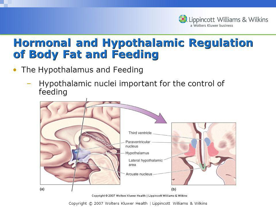 Copyright © 2007 Wolters Kluwer Health | Lippincott Williams & Wilkins Hormonal and Hypothalamic Regulation of Body Fat and Feeding Response to Elevated Leptin Levels –Activation of arcuate neurons that release αMSH and CART peptides Anorectic peptides- diminish appetite –Activation of arcuate neurons that release αMSH and CART peptides (Cont'd) Project to regions that orchestrate coordinated response of humoral, visceromotor, and somatic responses Paraventricular nucleus (humoral response) Intermediolateral gray matter of spinal cord Lateral hypothalamus