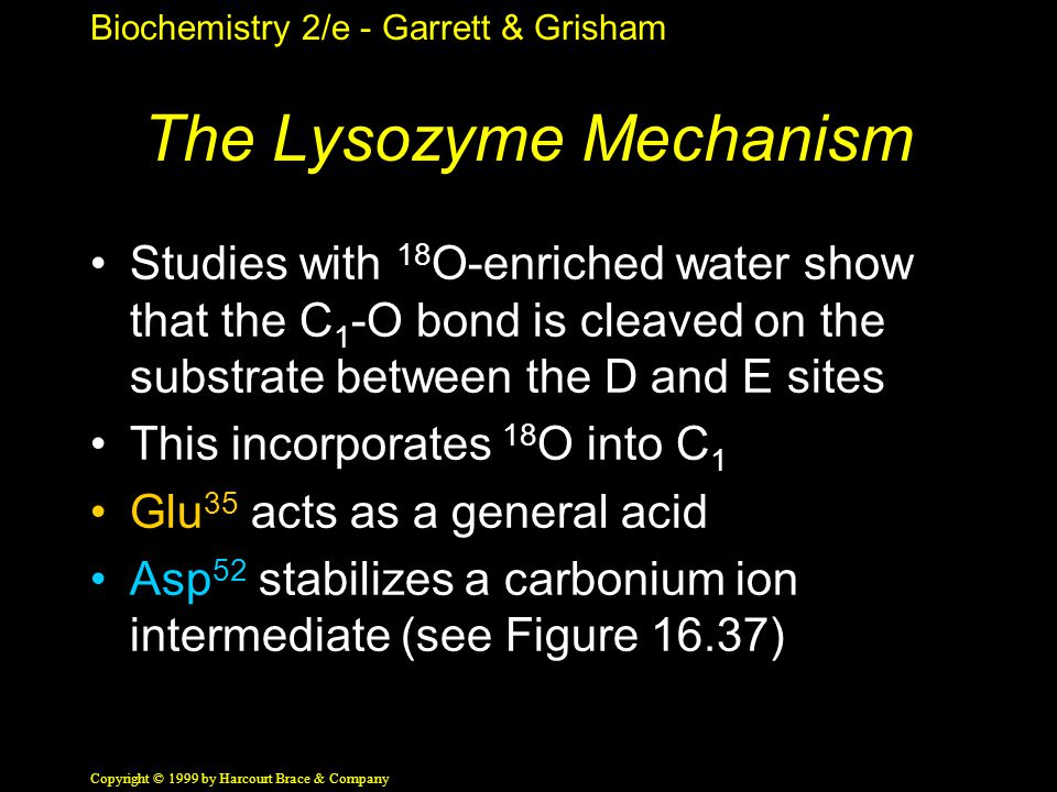 Biochemistry 2/e - Garrett & Grisham Copyright © 1999 by Harcourt Brace & Company The Lysozyme Mechanism Studies with 18 O-enriched water show that the C 1 -O bond is cleaved on the substrate between the D and E sites This incorporates 18 O into C 1 Glu 35 acts as a general acid Asp 52 stabilizes a carbonium ion intermediate (see Figure 16.37)