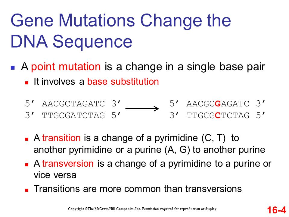 Copyright ©The McGraw-Hill Companies, Inc. Permission required for reproduction or display A point mutation is a change in a single base pair It invol