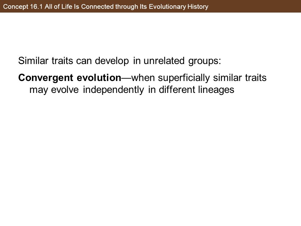Concept 16.1 All of Life Is Connected through Its Evolutionary History Similar traits can develop in unrelated groups: Convergent evolution—when super