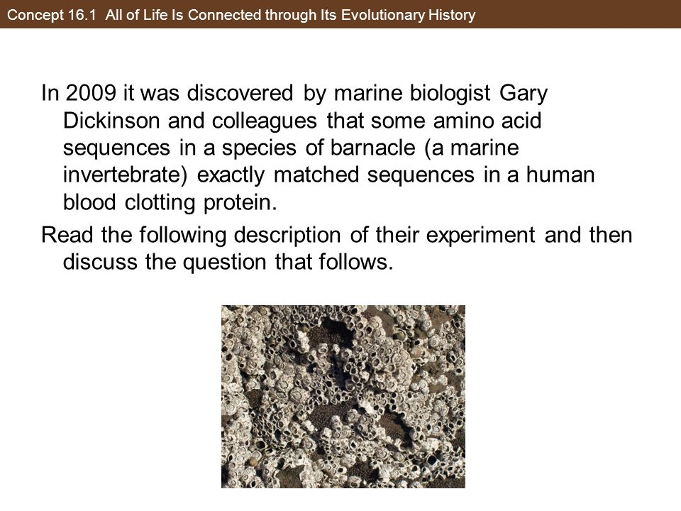 Concept 16.1 All of Life Is Connected through Its Evolutionary History In 2009 it was discovered by marine biologist Gary Dickinson and colleagues tha