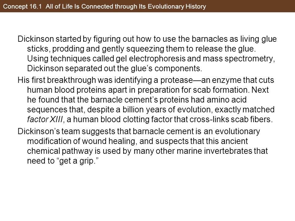 Concept 16.1 All of Life Is Connected through Its Evolutionary History Based on the description of this study provided on the previous slides, what do the researchers appear to be interpreting from their study about evolutionary history of barnacles and humans.