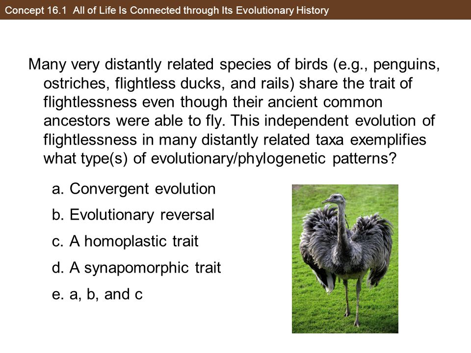 Concept 16.1 All of Life Is Connected through Its Evolutionary History Many very distantly related species of birds (e.g., penguins, ostriches, flight