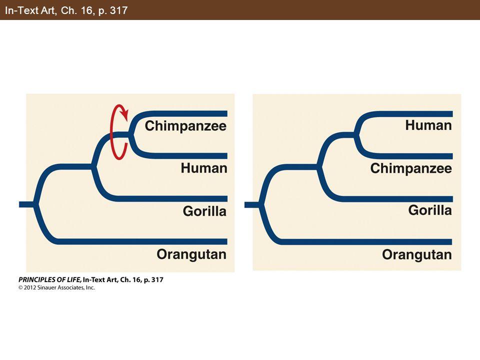 Figure 16.1 Clades Represent All the Descendants of a Common Ancestor