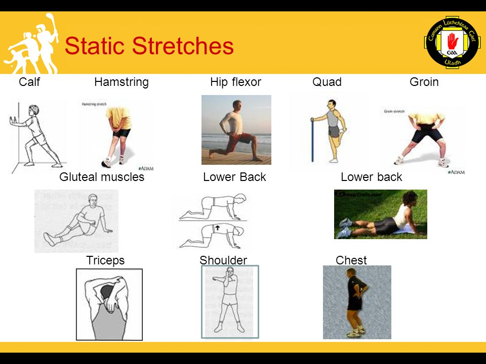 Static Stretches Calf Hamstring Hip flexor Quad Groin Gluteal muscles Lower Back Lower back Triceps Shoulder Chest