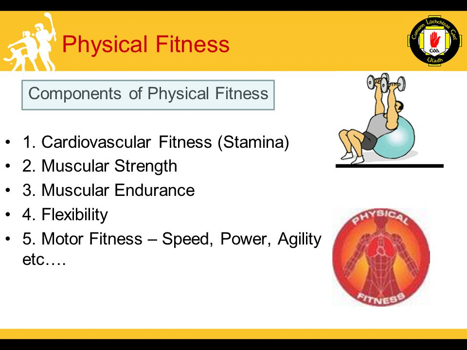 Components of Physical Fitness 1. Cardiovascular Fitness (Stamina) 2.