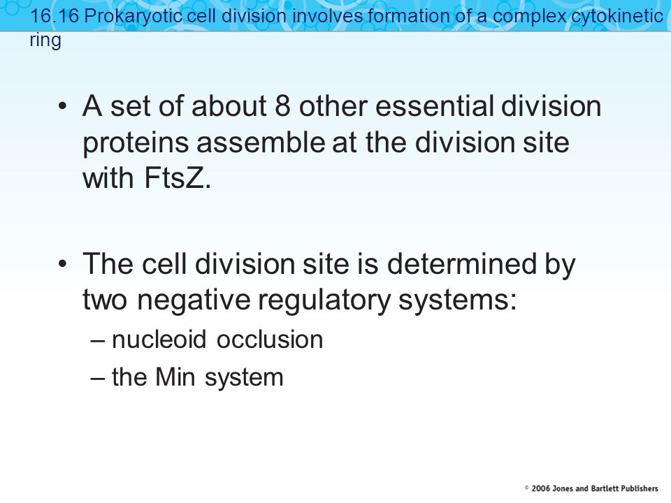 A set of about 8 other essential division proteins assemble at the division site with FtsZ.