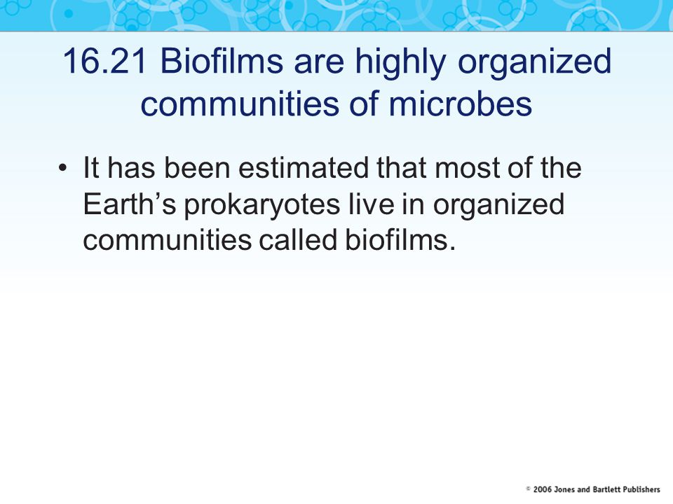 16.21 Biofilms are highly organized communities of microbes It has been estimated that most of the Earth's prokaryotes live in organized communities called biofilms.