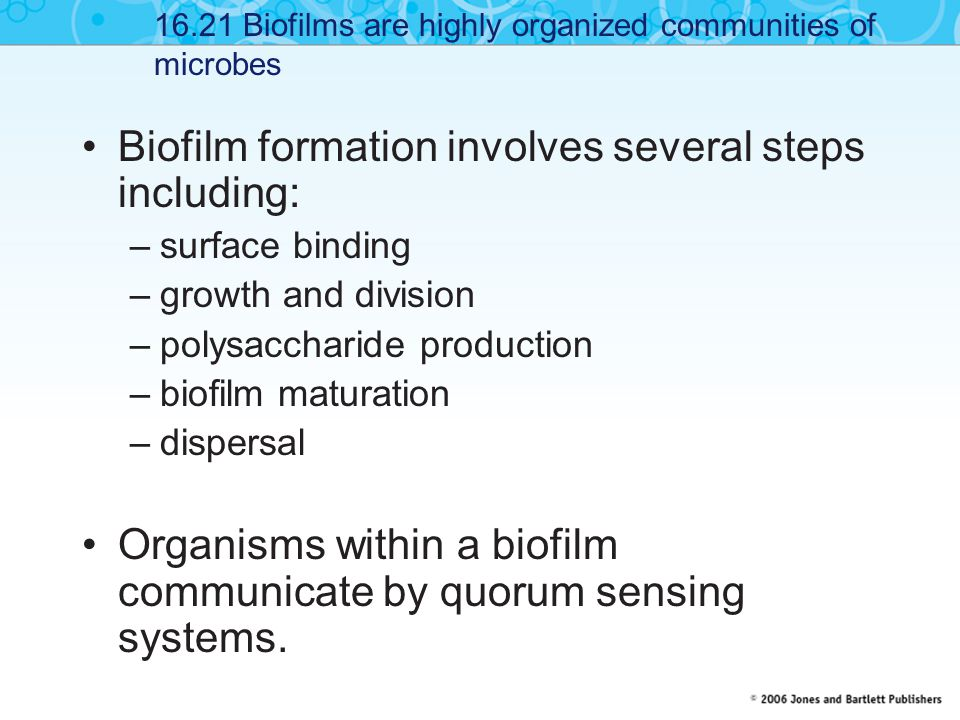 Biofilm formation involves several steps including: –surface binding –growth and division –polysaccharide production –biofilm maturation –dispersal Organisms within a biofilm communicate by quorum sensing systems.