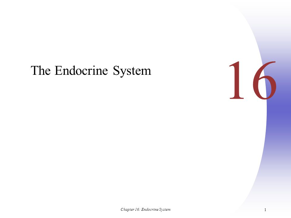 Chapter 16: Endocrine System 2 Endocrine System: Overview  Endocrine system – the body's second great controlling system which influences metabolic activities of cells by means of hormones  Endocrine glands – pituitary, thyroid, parathyroid, adrenal, pineal, and thymus  The pancreas and gonads produce both hormones and exocrine products