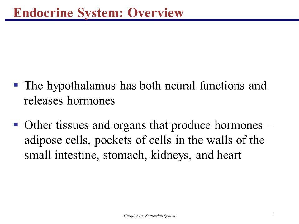 Chapter 16: Endocrine System 4 Major Endocrine Organs Figure 16.1