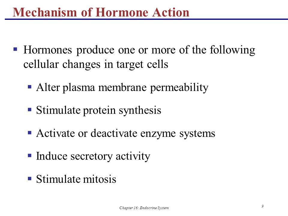 Chapter 16: Endocrine System 30 Figure 16.5 Major Endocrine Organs: Pituitary (Hypophysis)