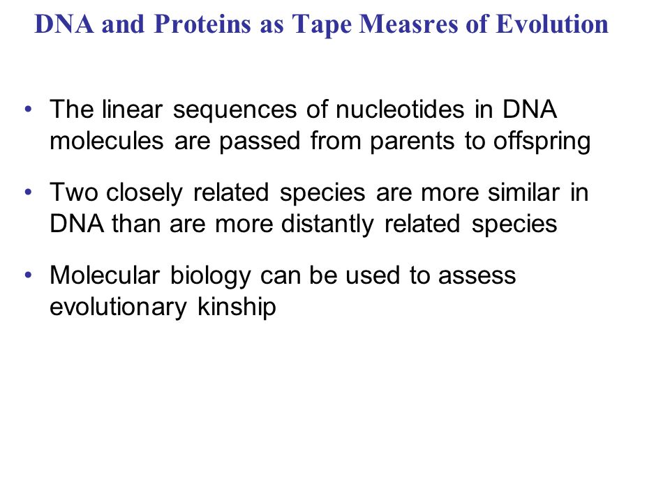 DNA and Proteins as Tape Measres of Evolution The linear sequences of nucleotides in DNA molecules are passed from parents to offspring Two closely re