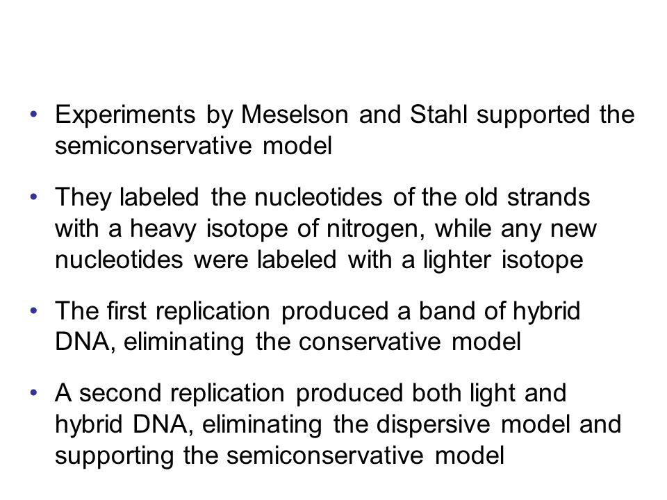 Experiments by Meselson and Stahl supported the semiconservative model They labeled the nucleotides of the old strands with a heavy isotope of nitroge