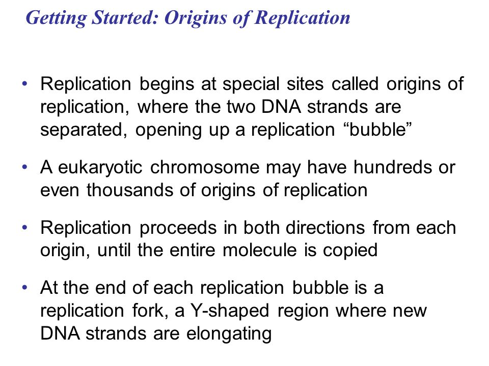 Getting Started: Origins of Replication Replication begins at special sites called origins of replication, where the two DNA strands are separated, op
