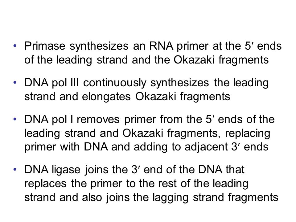 Primase synthesizes an RNA primer at the 5 ends of the leading strand and the Okazaki fragments DNA pol III continuously synthesizes the leading stran
