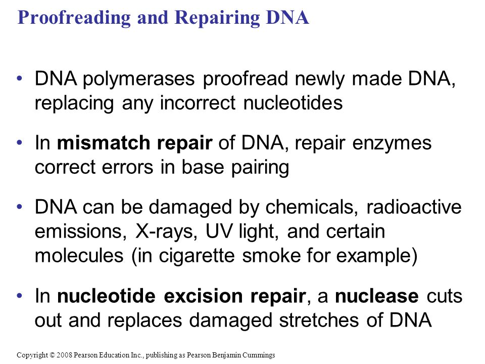 Proofreading and Repairing DNA DNA polymerases proofread newly made DNA, replacing any incorrect nucleotides In mismatch repair of DNA, repair enzymes