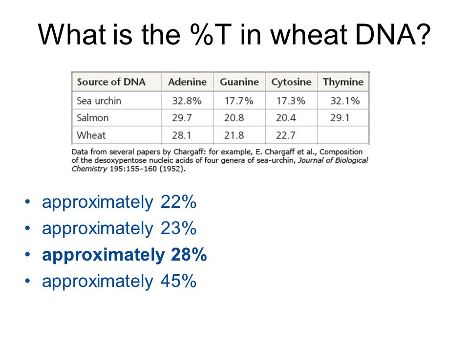 What is the %T in wheat DNA? approximately 22% approximately 23% approximately 28% approximately 45%