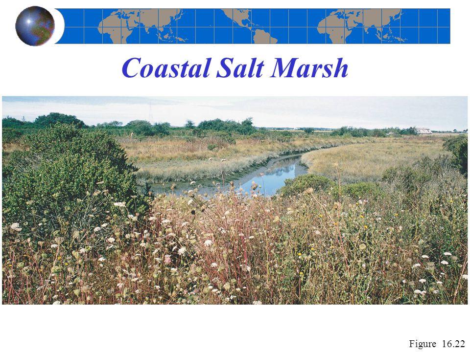 Coastal Salt Marsh Figure 16.22