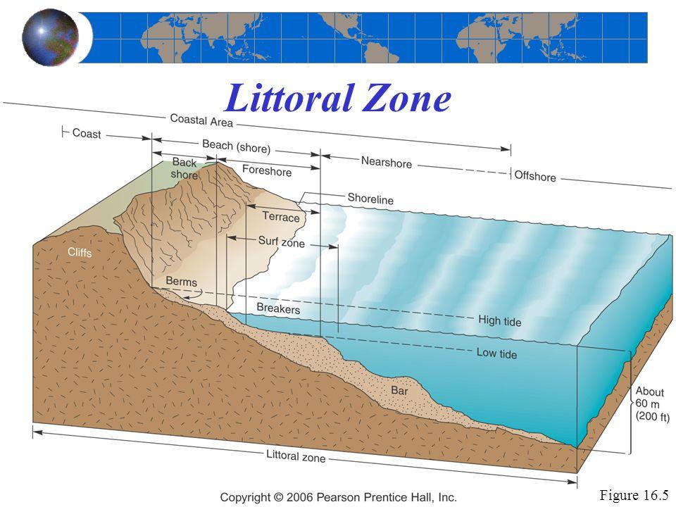 Littoral Zone Figure 16.5