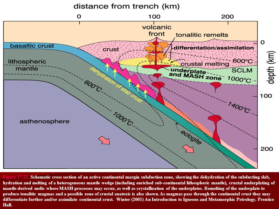 Figure 17-23. Schematic cross section of an active continental margin subduction zone, showing the dehydration of the subducting slab, hydration and m