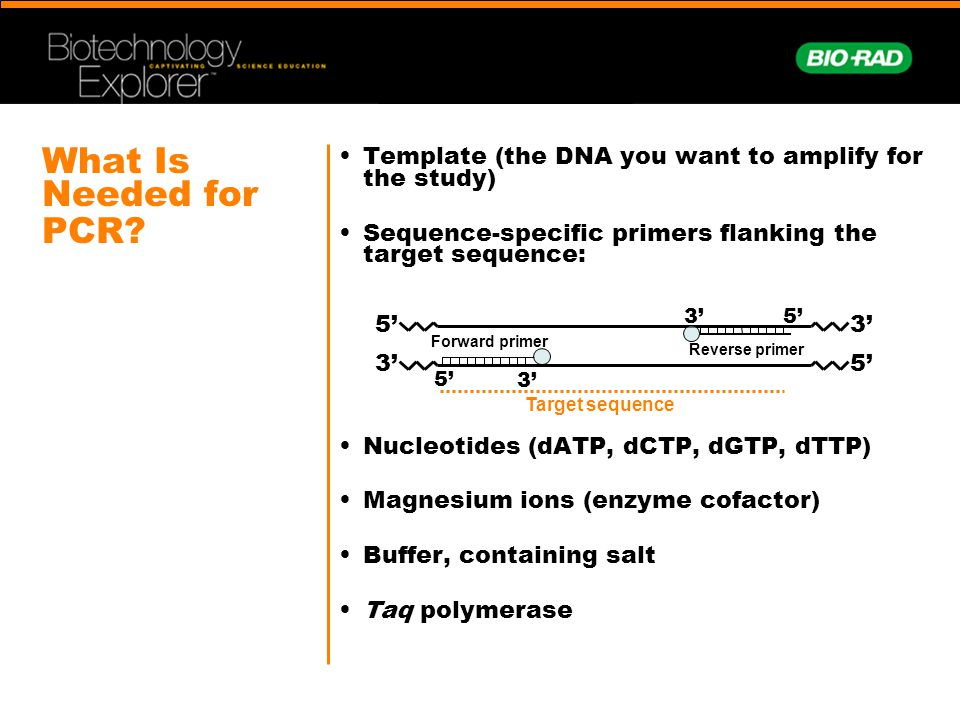 What Is Needed for PCR? Template (the DNA you want to amplify for the study) Sequence-specific primers flanking the target sequence: Nucleotides (dATP