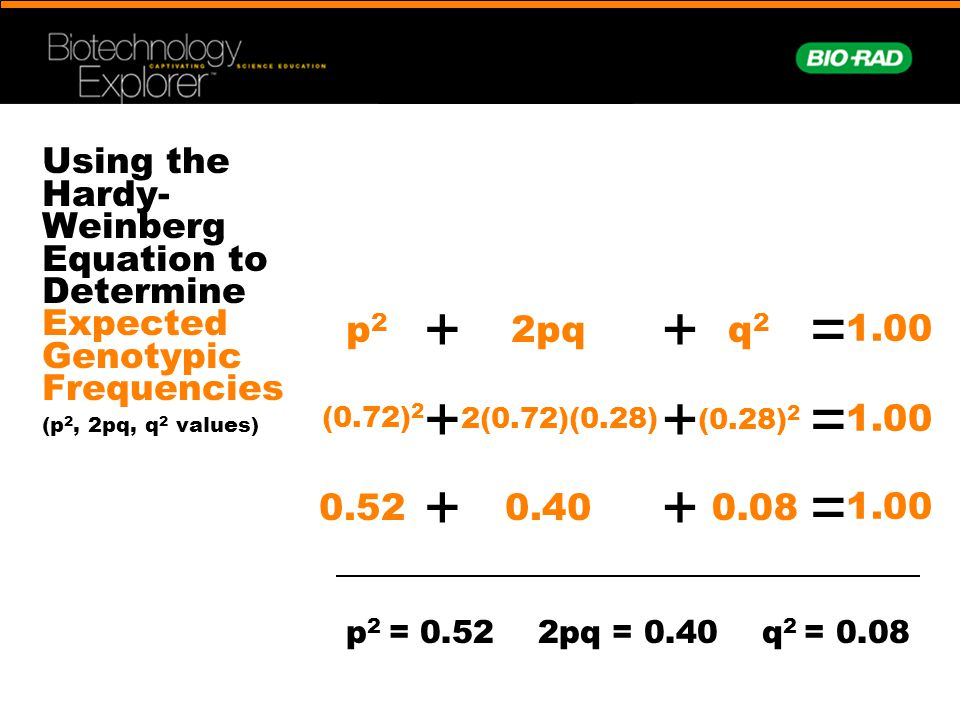 Using the Hardy- Weinberg Equation to Determine Expected Genotypic Frequencies (p 2, 2pq, q 2 values) p2p2 + 1.00 = 2pq + q2q2 (0.72) 2 + 1.00 = 2(0.7