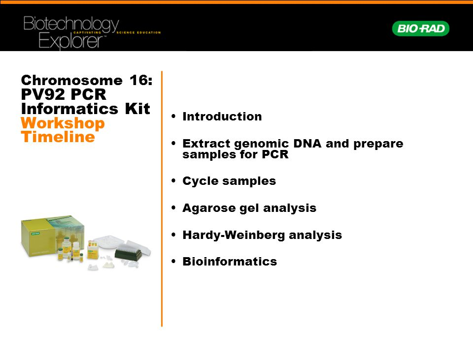 Chromosome 16: PV92 PCR Informatics Kit Workshop Timeline Introduction Extract genomic DNA and prepare samples for PCR Cycle samples Agarose gel analy