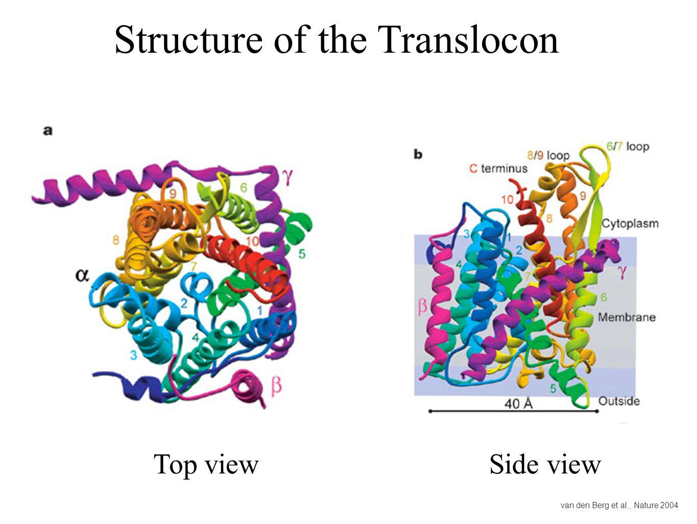 Structure of the Translocon van den Berg et al., Nature 2004 Top viewSide view