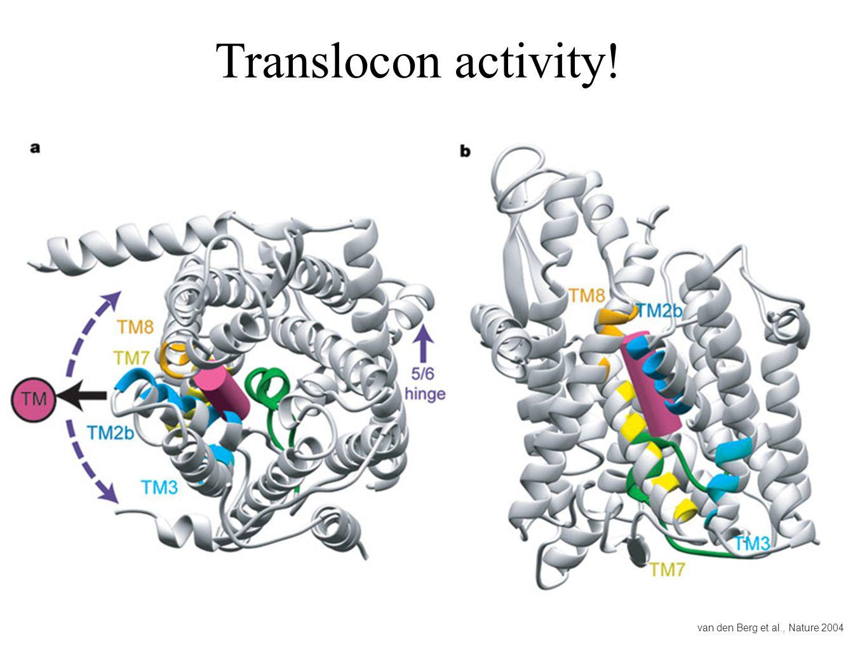 Translocon activity! van den Berg et al., Nature 2004